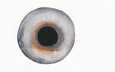 Eye illustration from the Daylight and Architecture magazine