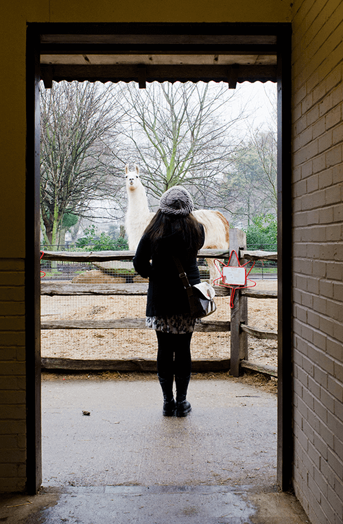 Light contrast with girl in doorframe in front of llama